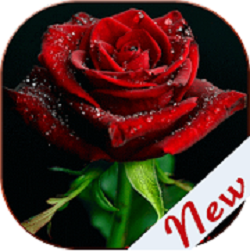 Flowers and Roses Images apk apps free download