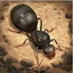 THE ANTS apk apps free download